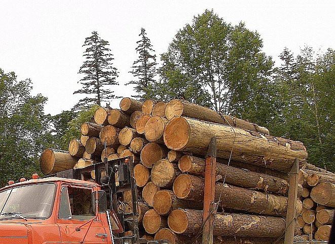 «Плати за вход и жри, сколько хочешь»: как арендаторы губят лес в Приморье