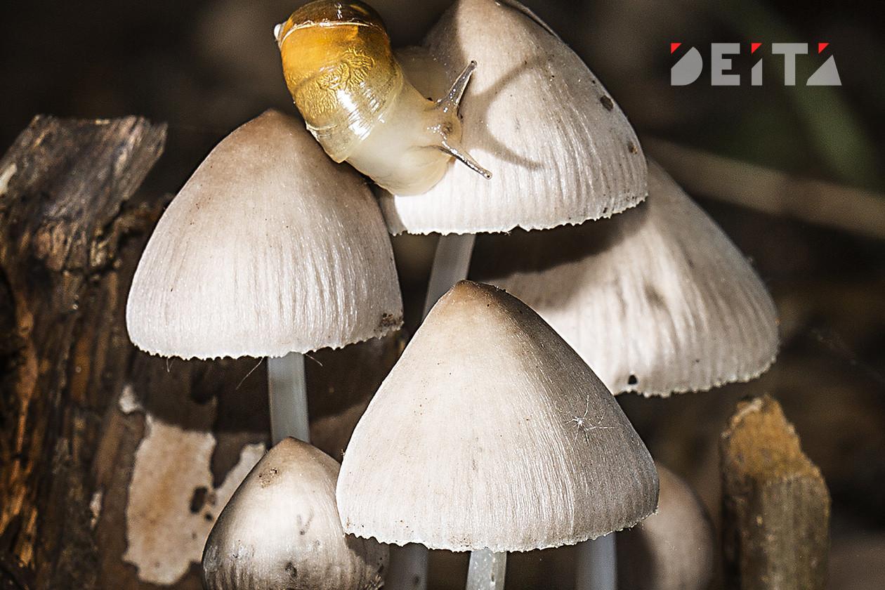 Миллион за мухомор: штраф за сбор грибов вводится в России