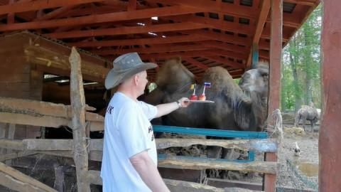 Кот за Бельгию, верблюд за Россию: мнения разделились