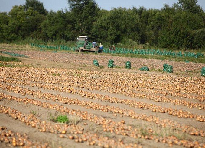 Более 7,5 тысяч тонн картофеля и овощей собрали в Приморье