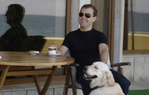 Медведев предложил отбирать животных у россиян