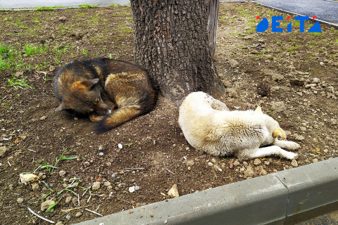 Десант по отлову бездомных собак собирает губернатор на Камчатке