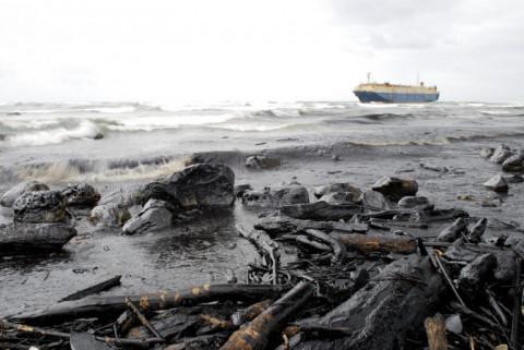 Тысячи мертвых животных выбросило на берег в Хабаровском крае
