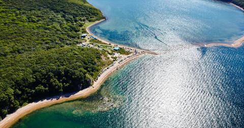 Сезон атакующих медуз начался в Приморье