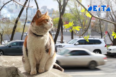 Корма для животных могут исчезнуть в России