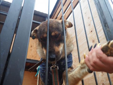 Бездомных собак во Владивостоке лечат и отправляют жить в новый дом