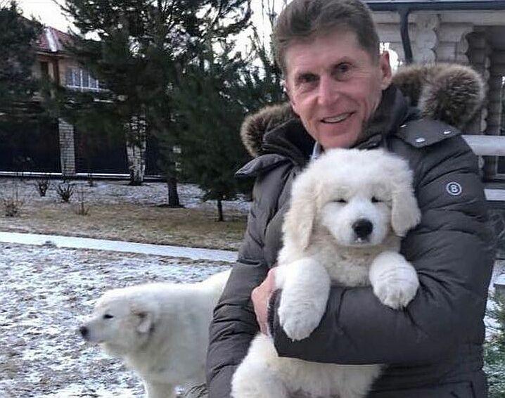 Пропала Юка: Кожемяко просит помочь найти его собаку