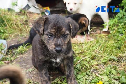 Бастрыкин не спас Камчатку от бродячих собак