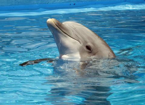 Измождённого дельфинёнка спасают в Амурском заливе