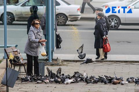 Приморцы организовали кампанию по спасению голубей