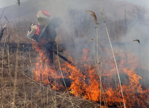 Лесных пожаров в Приморье больше, но тушат их быстрее