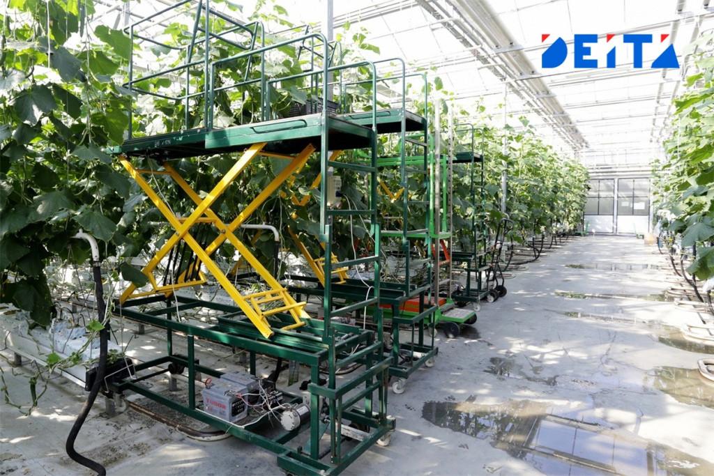 Приморские аграрии увеличили сбор овощей на 115%