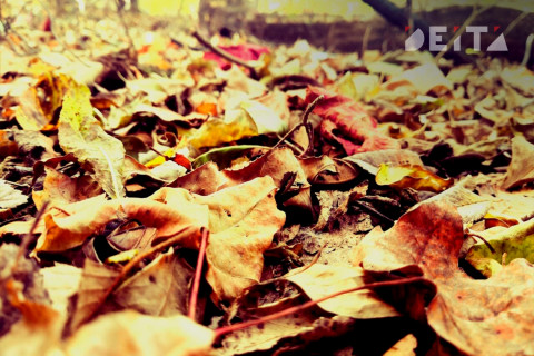 Россиян предупредили об опасности опавших листьев