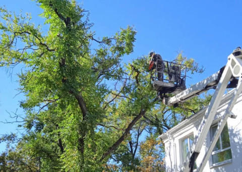 Санитарную обрезку деревьев проводят во Владивостоке
