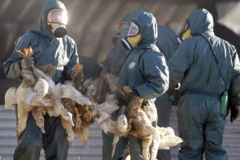 Опасный штамм птичьего гриппа нашли в Южной Корее