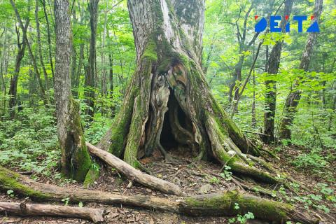 Оцифровку леса начали на Дальнем Востоке
