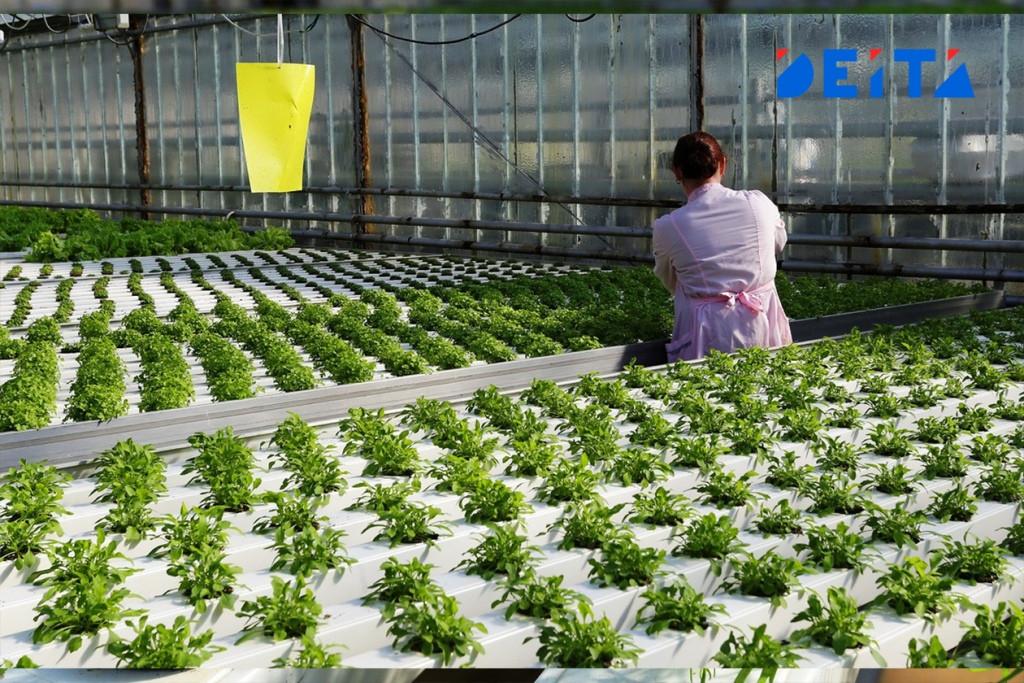 Производителям овощей помогут финансово в Приморье