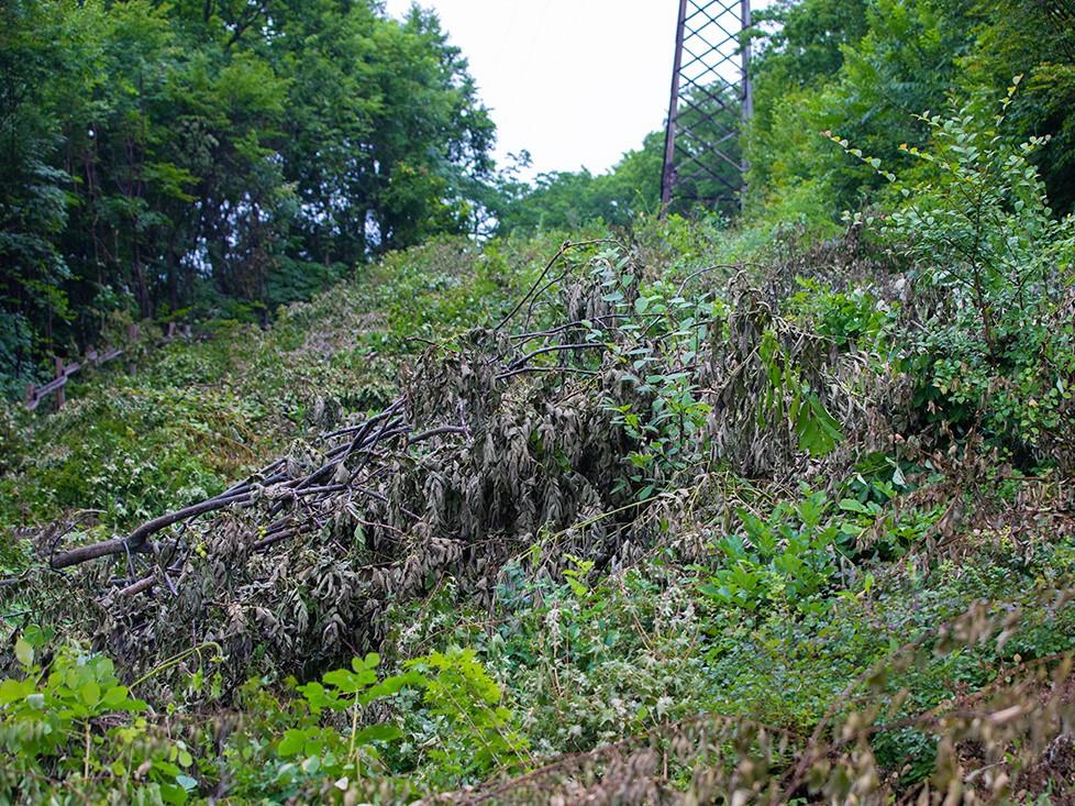 Сотни деревьев незаконно вырубили в пригороде Владивостока
