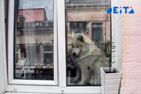 Штраф 50 тысяч за брошенных животных хотят ввести в Госдуме