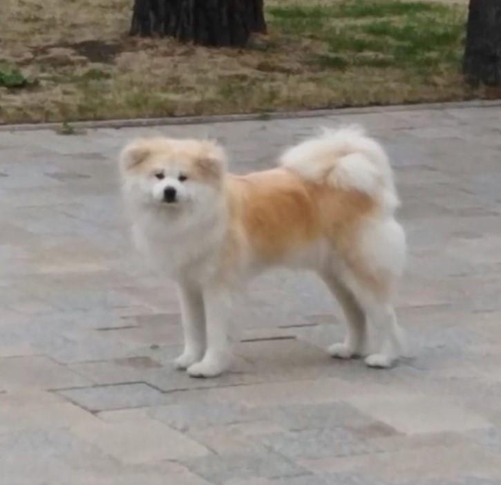 Собака губернатора найдена мертвой