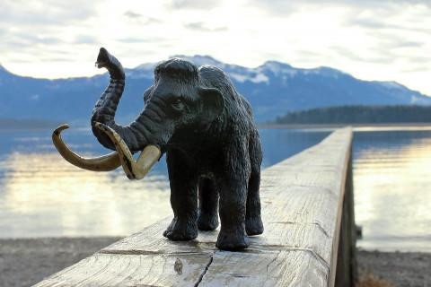 Слоны в шоке: Американцы планируют воскресить мамонтов