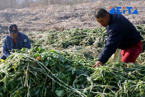 Работают за еду: Жителям Камчатки предложили собрать урожай за проднаборы