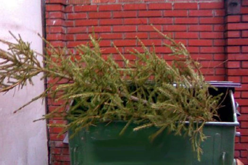 МЧС призвало не держать елку в квартире до весны