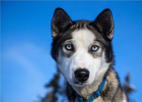 Как защитить свою собаку зимой, рассказали кинологи