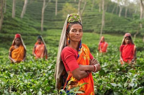 Индийский чай может подорожать из-за коронавируса