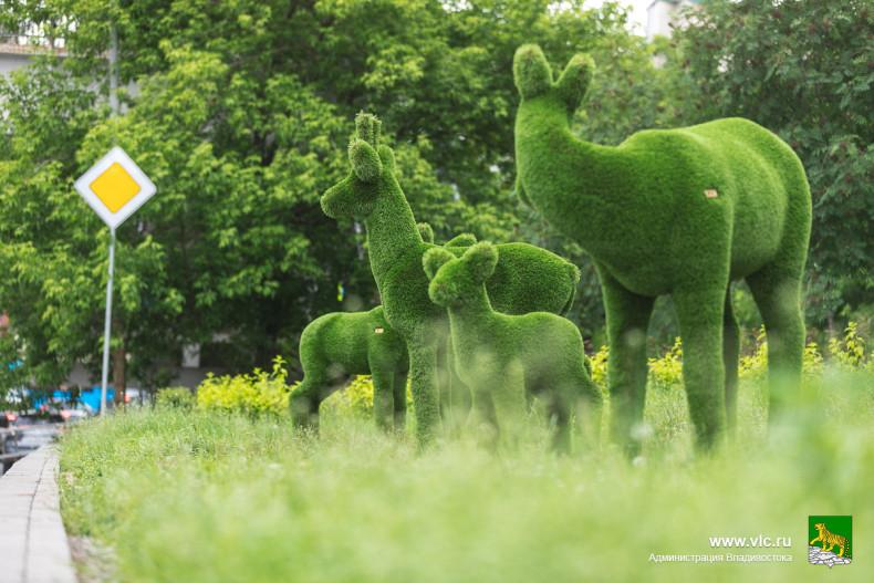 Зеленое искусство покоряет Владивосток