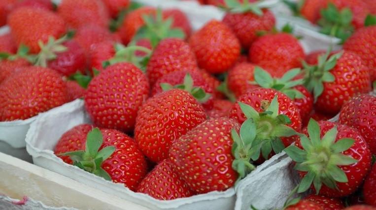 Жители Приморья смогут принять участие в фестивале «Сделано в Приморье: праздник ягод и сыров»