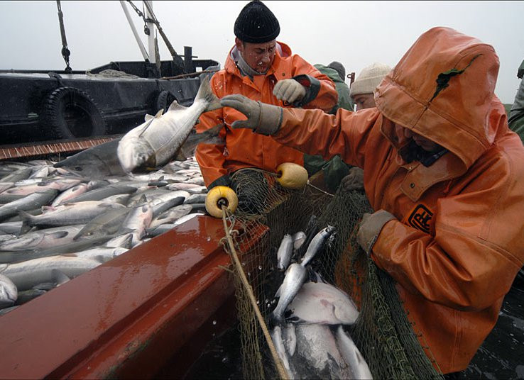 На Приморский край приходится почти четверть выловленной в ДФО рыбы