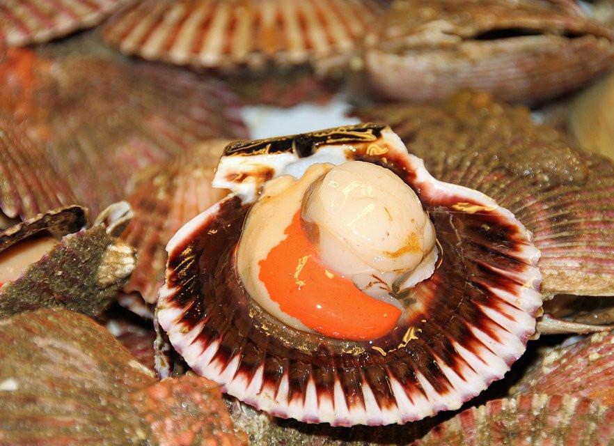 В Приморье вырастили на 65% больше морских деликатесов