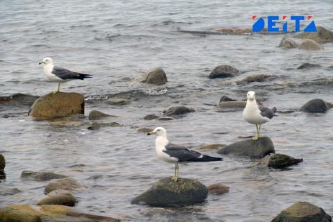 Прокуратура и охотнадзор расследуют массовую гибель птиц в Приморье