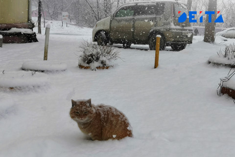 Зима вернётся в Приморье на выходных