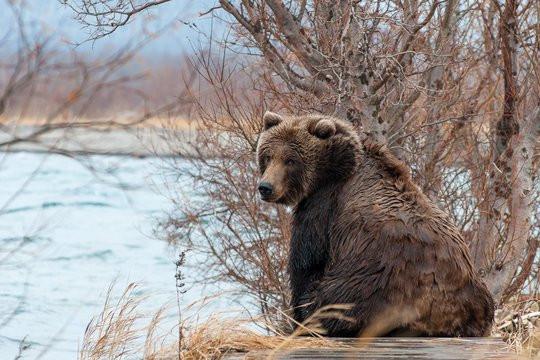 Медведь гонялся за мужчиной по улицам города