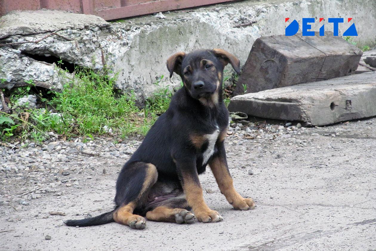 Стая бездомных собак напала на ребёнка в Приморье