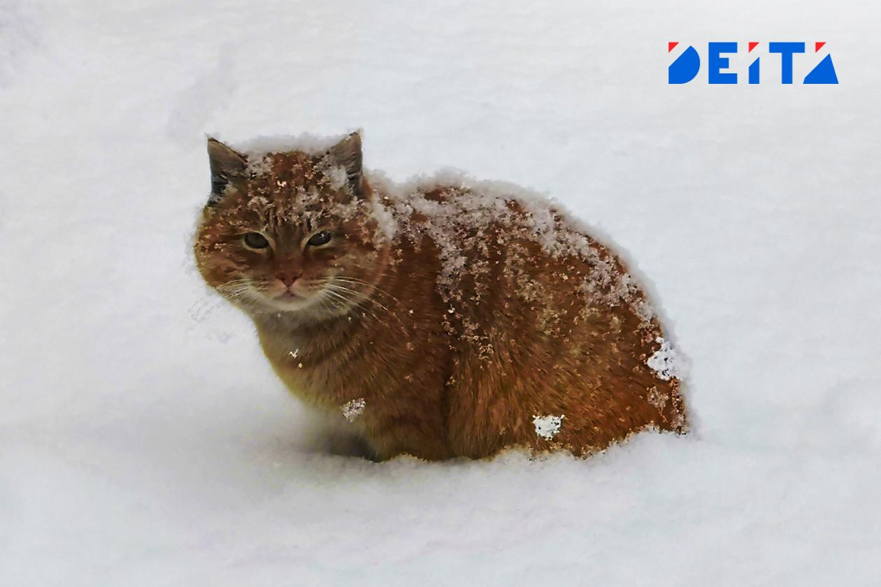 Собаки проиграли котам в Приморье