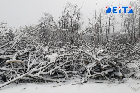 Владивосток продолжают расчищать от валежника, несмотря на переполненный полигон