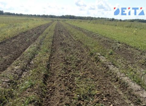 Приморские сельхозпроизводители посеяли ранние зерновые