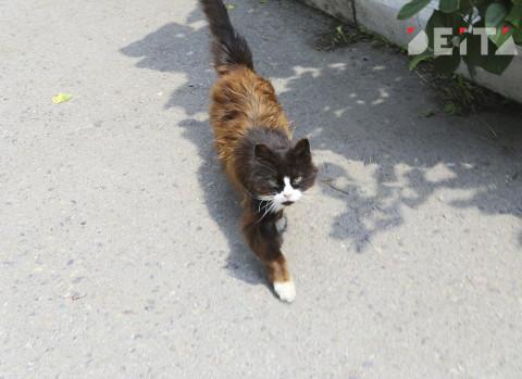 «Киньте в кусты, там и подохнет»: раненую кошку спасли от живодеров в Приморье