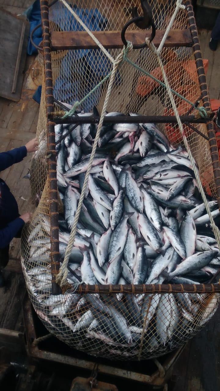 Дальневосточную рыбу будут возить атомным ледоколом