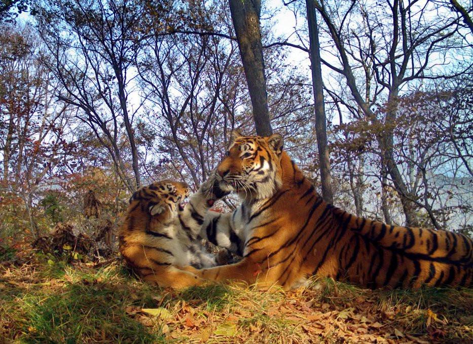 Новое здание построил центр «Амурский тигр» в Приморье