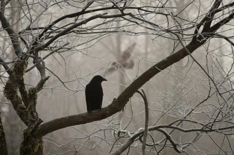 Тревожный знак: черные вороны поселились в правительстве