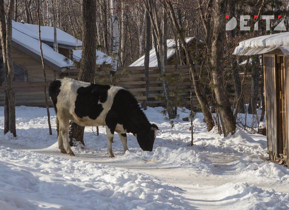 Сколько заработать с козы и коровы, чтобы стать не малоимущим, определили в Приморье