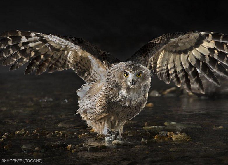 Для хищных птиц в Сахалинском зоопарке сделают искусственную скалу за 11 млн