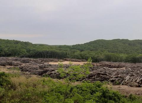 Лес рубят, щепки считают: бороться с лесной мафией намерены в Приморье