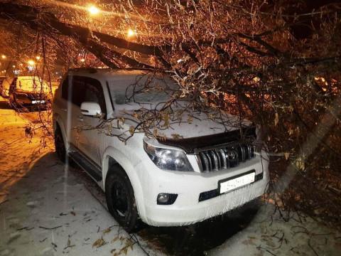 Хруст стоит, будто кости ломают: снегопад повалил сотни деревьев во Владивостоке