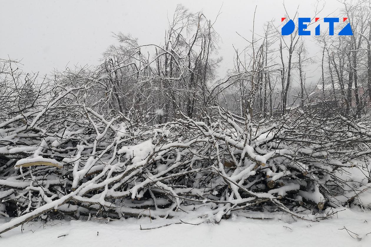 Новый снежный циклон пообещали приморцам на следующей неделе