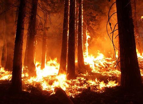 В Приморье бушует страшный лесной пожар